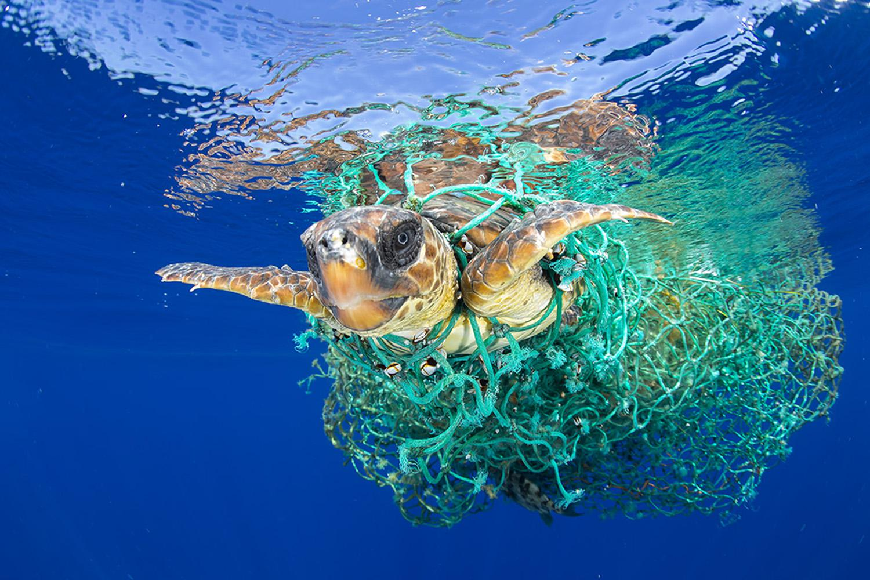 Las tortugas, afectadas por la contaminación del plástico
