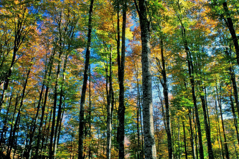 wwf bosques restauración